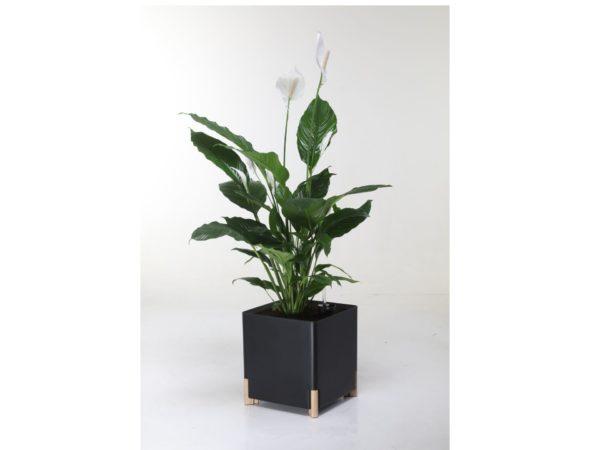 Kastmissüsteemiga taimepott kandiline must