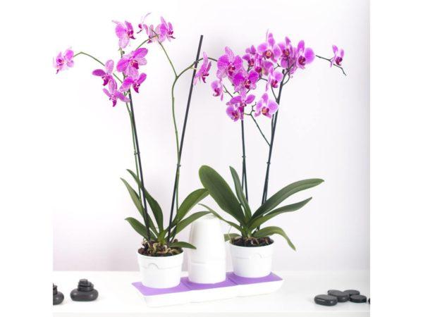 Kastmissüsteemiga moodul lillepott 2