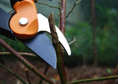 Õunapuude ja teiste viljapuude- ja põõsaste lõikus