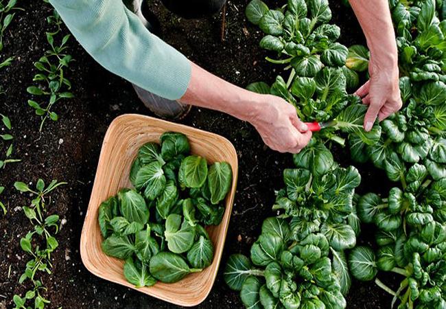 miks valida kasvuhoone