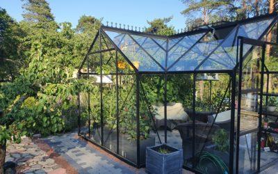 Minu kasvuhoone Sirius – taimed, diivan, muusika ja seltskod