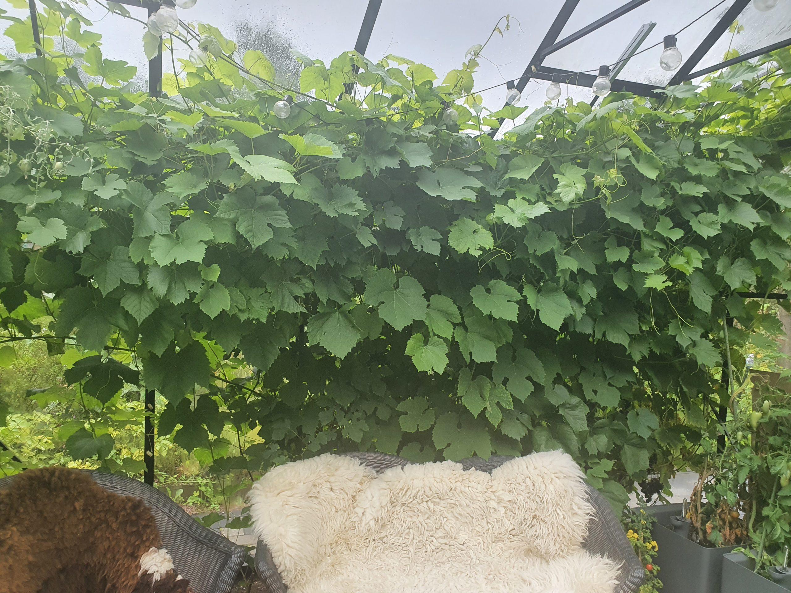 Kasvuhoone-aiamaja Vitavia Sirius